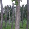 Остров Ягры (Северодвинск) 7